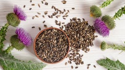 Chardon-Marie, la plante pour votre foie